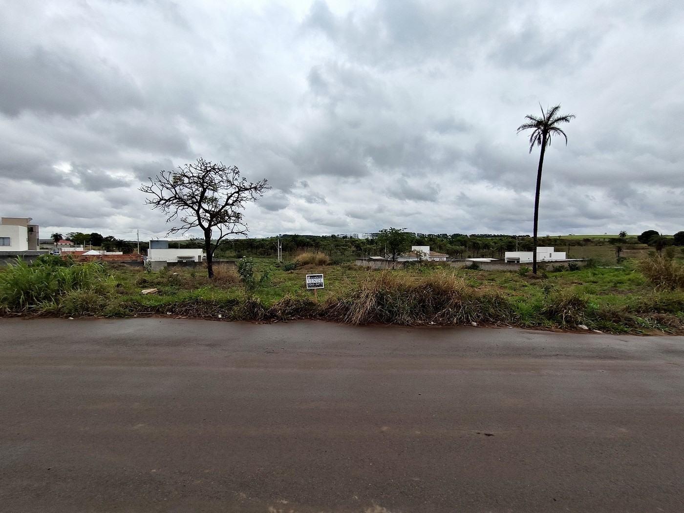 Lote – Palmeiras